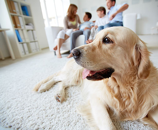 Pet Stain and Pet Odor Control